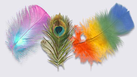 plumas gay